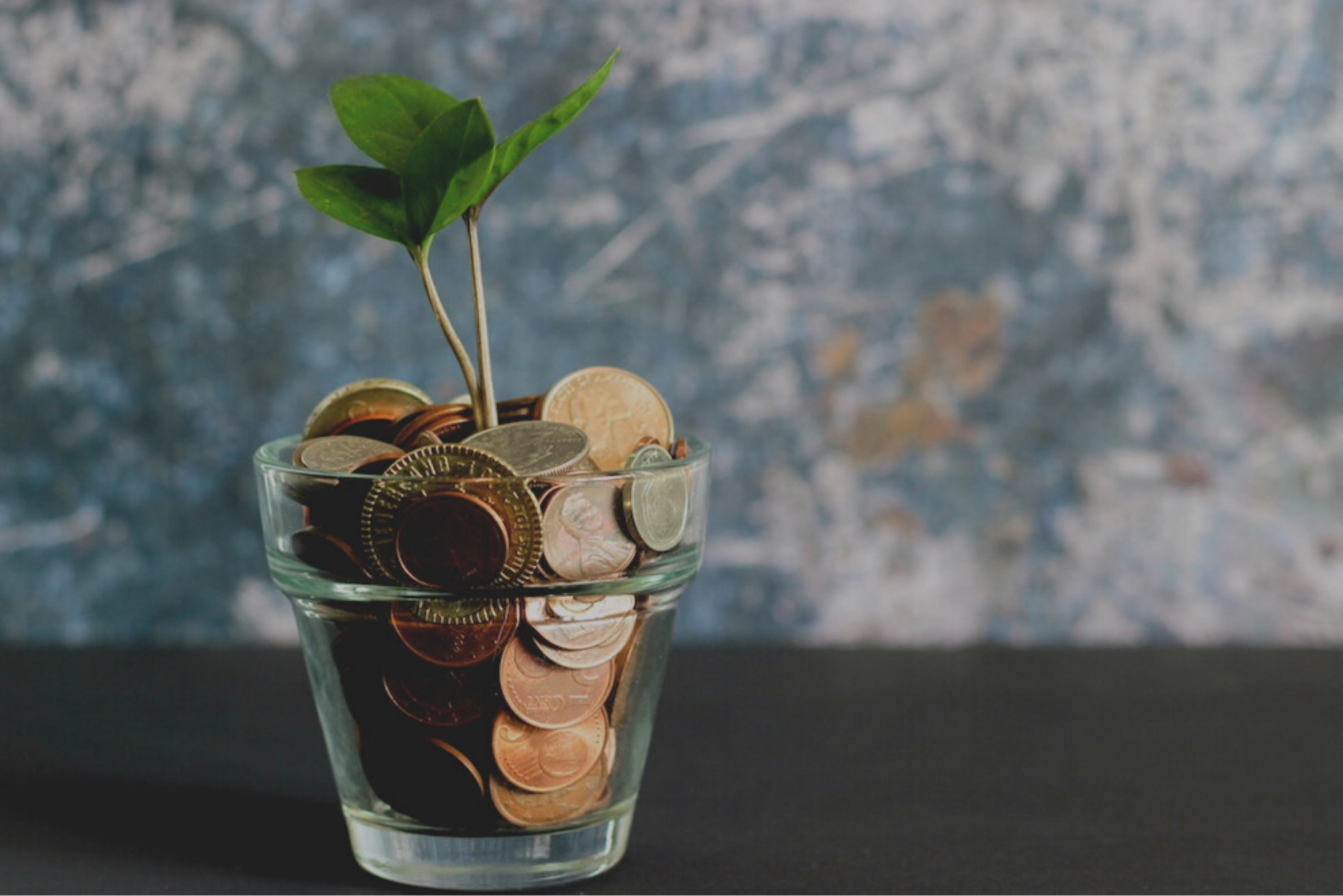 Plant growing from pot of money: How to treat your money like a lover